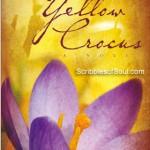 yellow-crocus-laila-ibrahim